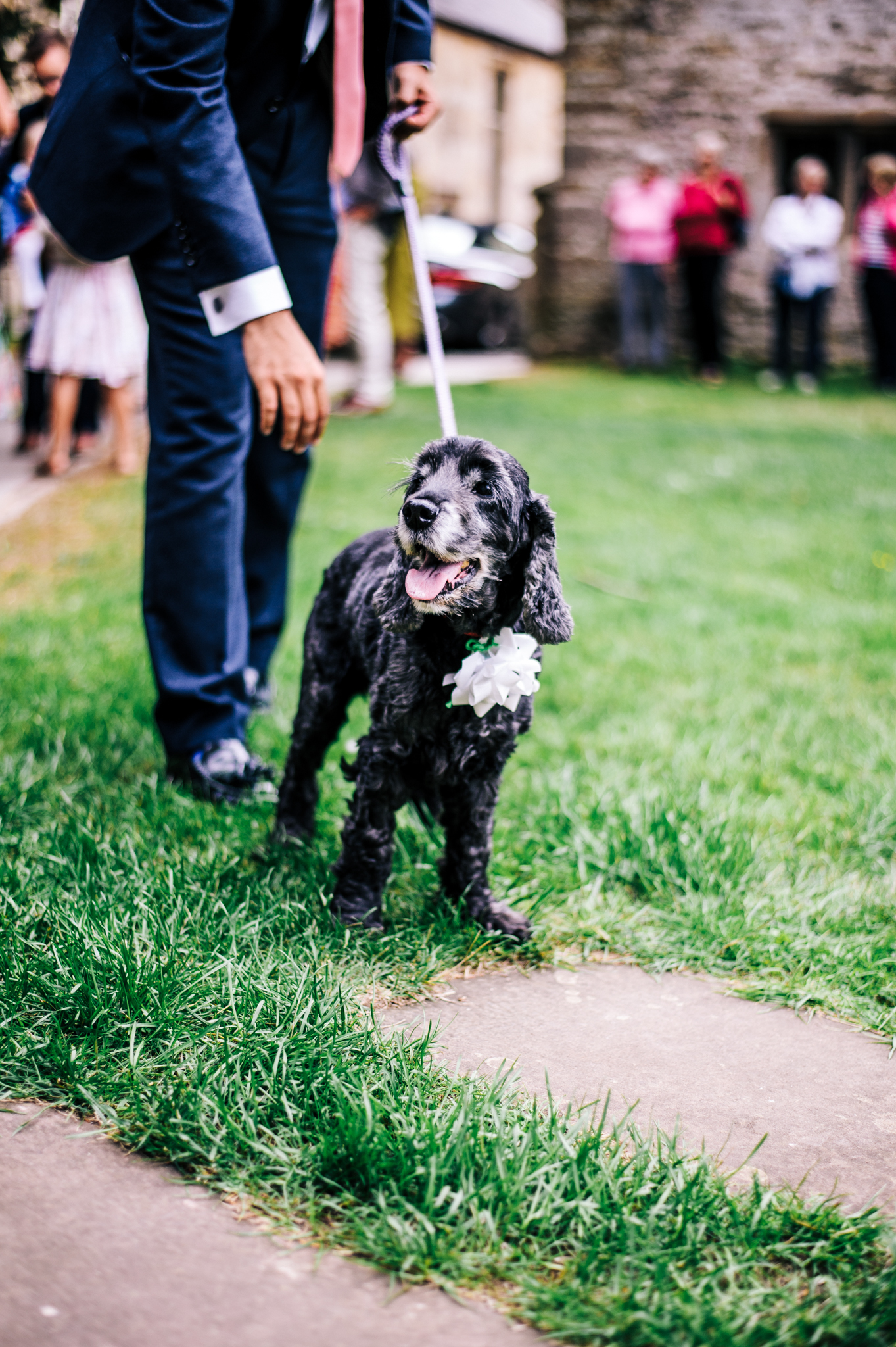 Gorgeous black spaniel at wedding in Mells, Frome