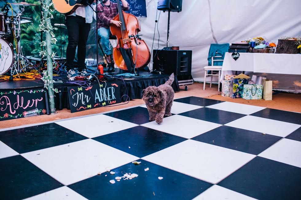 family dog inspecting left over cake at wedding