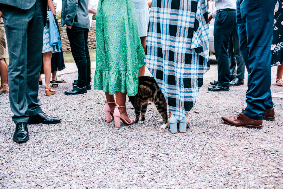 farm cat wanting to be fussed and fed by wedding guests